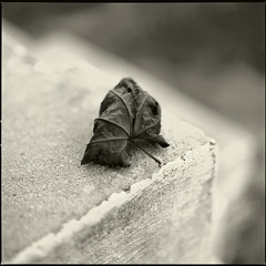 Leaf on Step (T. Scott Carlisle) Tags: macro 6x6 film leaf noiretblanc blu hasselblad step toned tsc techpan tphotographic tphotographiccom tscarlisle tscottcarlisle