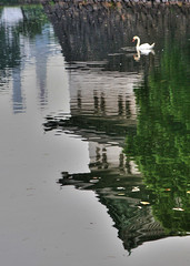 Imperial Palace and the Swan (` Toshio ') Tags: reflection castle japan tokyo swan palace imperialpalace hdr guardtower toshio