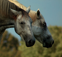 The Best Of Friends (nailbender) Tags: friends horse love ilovenature farm top20horsepix invited blountcountyalabama nailbender gtaggroup superbmasterpiece jdmckinnon