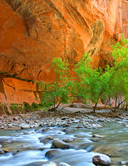 Zion Narrows 2 (mrwsierra) Tags: zion narrows