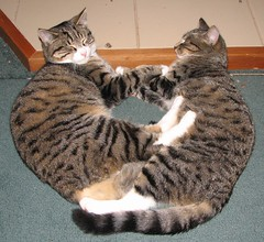 Two Hearts Beat as One (Somerslea) Tags: sleeping newzealand pet cute home cat canon death interestingness kitten feline couple tabby kitty scout 2006 canterbury powershot explore nz southisland roadkill 51 s2is roxy loved canonpowershots2is murph murphy missed died mtsomers kitekat midcanterbury powershots2is canons2is southislandnz southislandnewzealand nouvellezelande reveley cc200 somerslea sorelymissed mountsomers views200pool dearlyloved under230 1003200610062009 mareeareveley