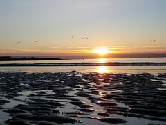Sunset in Bangor, Northern Ireland (Howard.) Tags: ireland sunset water beautiful birds fly bangor 2006 northernireland northern