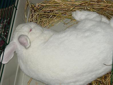 Caesar in naptime