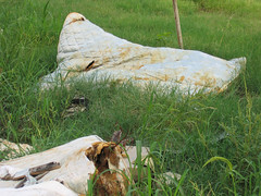 neworleans_10_jul_06 099 (mantella) Tags: katrina neworleans ninthward