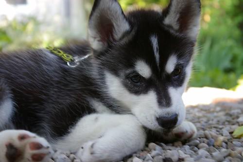 Puppy In Training Timeline Part 2