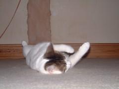 DSCF0048 (judey) Tags: cats twinkle