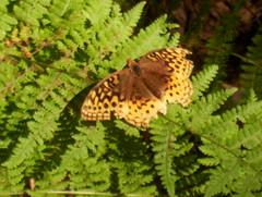 First Ones 019 (irish blue eyes) Tags: camp mountain driftwoodpa masonhill
