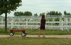 Strawberry fields forever (enjae) Tags: flower field minnesota strawberry morgan geranium radioflyer redwagon hydroponic ageseven 5hits