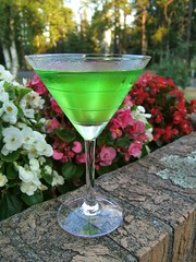 Apple Martini Anyone? (Micky**) Tags: flowers hot apple glass tag3 taggedout micky tag2 day tag1 very martini explore alcohol begonia oneyear ona explored theworldthroughmyeyes zlimen