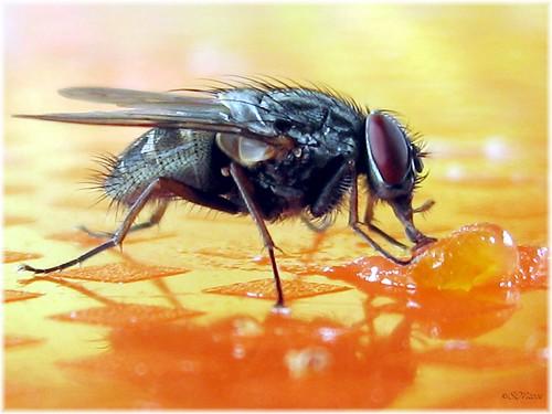Tại sao đập ruồi lại khó?