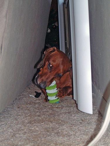 2005-12-25 - DoggieXMas-0051