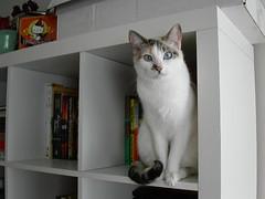 Runtina (lisamarie) Tags: cats cat kitty kitties