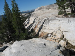 trees growing at the top of pothole dome (jendarling) Tags: meadows tuolumne 8906