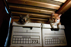 cats on bankers boxes