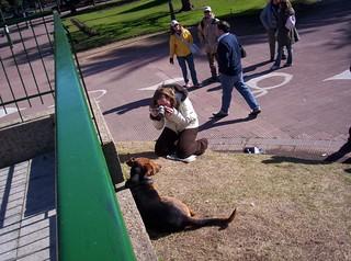 Como convertir a un perro en el nuevo bote de Flickr