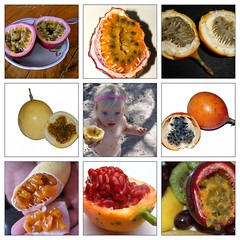 Passion Fruit (Eat-My-Heart-Out ,) Tags: fruit gertrudk granadilla passionfruit fruitandveg  bananapassionfruit bluelotus trav28 kulo curuba  akdanielson cocojacobs pedregosomiyako takaitaha