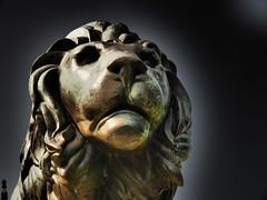 Monday  Face (Ostseetroll) Tags: badmuskau deu deutschland fürstpücklerpark geo:lat=5154744164 geo:lon=1472411488 geotagged sachsen montagsgesicht mondayface