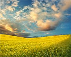 Spring sunset (Katarina 2353) Tags: sunset summer field landscape serbia vojvodina serbiainspired