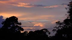 Erika's Remnants (Jim Mullhaupt) Tags: pink blue sunset red wallpaper sky orange sun storm color tree rain weather silhouette yellow clouds landscape gold evening nikon flickr sundown wind florida dusk hurricane palm exotic p900 tropical coolpix erika lightning thunder bradenton tropicalstorm endofday cloudsstormssunsetssunrises nikoncoolpixp900 coolpixp900 nikonp900 jimmullhaupt