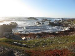 Pacific Coast (Paul 49 55) Tags: ocean california coast monterey surf pacific tide shoreline wave shore montereycounty pacificgrove asilomar tidal asilomarstatebeach