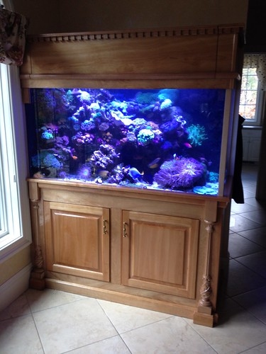225 Gal Custom Living Reef - Private Residence - CT