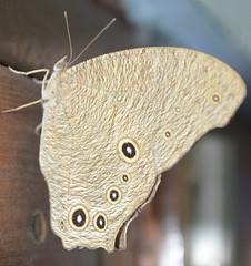 #buttery #my_room #beauty (prakharnayak95) Tags: beauty myroom buttery