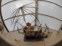 Umbrella Plants, Carnations, Leucadendron and White Filler by Michiko Parrish of the Koryu School (nano.maus) Tags: fisheye lauritzengardens japaneseflowerarrangement omahabotanicalsociety japaneseambiencefestival