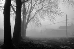 Adis Neblina (Don Vacomano) Tags: tree fog invierno niebla valdivia 2014