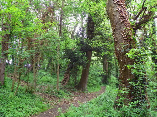 Godmanchester to St Ives 193: The Thicket, St Ives