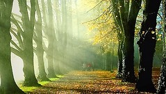 time for a walk through the golden october (♦ Peter & Ute Grahlmann ♦) Tags: autumn art nature leaves alley rays beams