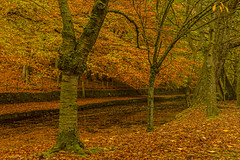Autumn (pollylew) Tags: