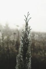 Silence (Niks Freimanis) Tags: morning autumn canon spider early web baltic latvia dew rasa medow latvija rudens 70d agrs tkli zirneklu agrais