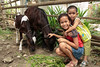Developing Dairy Zones for Smallholder Farmers in Agusan del Sur (Project No.: 22-0220-19-02) (Heifer International) Tags: philippines phl heifer mabuhay heiferinternational heiferphilippines