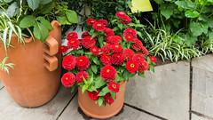 2015-06-25-122157_New York_Bronx, Botanical Garden