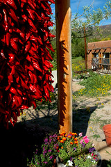 Hanging' with the Ristras (jwoodphoto) Tags: newmexico rural farmersmarket chiles ristra velarde redchile jwoodphoto