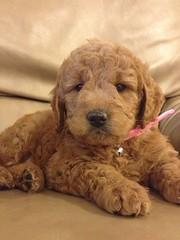 honeys-little-girl-in-her-new-home_8428596272_o