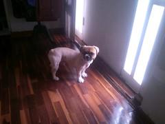 Chiki (Santiago Stucchi Portocarrero) Tags: lima perú santiagostucchiportocarrero hund perro can cane chien dog hound