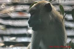 shy boy (tomzcafe) Tags: bukittimahnaturereserve singapore tamronsp5008 d70 nikon