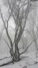 - eerie - (Jac Hardyy) Tags: eerie silence teutoburg forest teutoburger wald sombre wood woods dark snow gemeine hainbuche hagebuche common hornbeam european carpinus betulus first tree trees trunk trunks stem stems scary creepy winter winterbild stillness nebelig nebel fog foggy mist misty schnee baum bäume stamm stämme gruselig unheimlich ruhe stille still ruhig schweigen schweigend düster düsterer dunkel dunkler finster finsterer trüb trist frost frosty frostily frostig frory frozen scenery gespenstisch