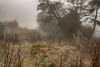 Foggy days (ellie.taylor30) Tags: mist hampshire whitchurch nikon landscape winter flickrnature
