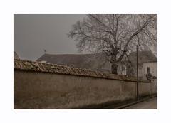 Hiver (hélène chantemerle) Tags: arbres brouillard chaussée extérieur fenêtre murs paysages plantes rue cielbas gris beige givre tree mist gray frost winter street rural village countryside