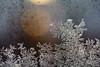 Ice crystals (michelbosma) Tags: d7100 nikon macro ijs cold crystal ice koud kristal ochtend ruit window winter apeldoorn gelderland netherlands nl