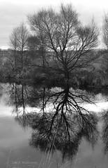 Cors Caron (Zoe K Williams) Tags: corscaron ceredigion trees reflection reflections water reeds grass grasses wales welsh bog peat sedge naturereserve nature landscape sky still calm blackandwhite bw