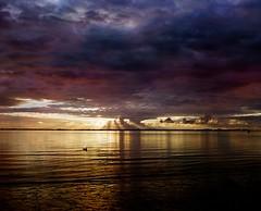Postcard from Le Crotoy (Max Sat) Tags: 120 667 6x7 analog beach bessa bessaiii ciel coucherdesoleil film france fuji fujigf670 kodak landscape maxsat maxwellsaturnin middleformat moyenformat plage portra portra400 sea seascape sky sunset voigtlander water