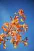 Rennes Automne feuilles rousses - atana studio (Anthony SÉJOURNÉ) Tags: rennes automne feuilles rousses atana studio anthony séjourné