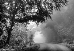 Misty Corner (Ninja Dog - 忍者犬) Tags: newton northamptonshire eastmidlands england english uk september autumn 2016 landscape rural natural nature trees sycamoretrees eldertrees countrylane mist misty mono moody earlymorning ashtrees woods d7200 nikon hdr monochrome beechtrees