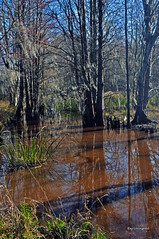 SWAMP 2 (KayLov) Tags: nature environment ecology swamp phinizy augusta ga georgia creek water pond lake wildlife