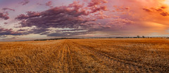 Sunset at Freeling (Anthony's Olympus Adventures) Tags: adelaide southaustralia sa australia australian freeling adelaideplains country sunset sundown colour colourful color beautiful wow nice amazing sun sky summer farmland farm paddock crop olympusem10 olympus olympusomd panorama panoramic orange yellow purple warm cloud postprocessing processing lightroom landscape fav60