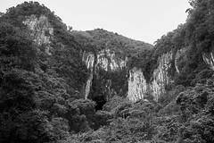 Gunung Mulu National Park, Borneo, Malaysia (bm^) Tags: travel gunungmulu sarawak maleisië deer cave caves deercave borneo bako national park boom bomen tree trees distagont228 distagon282zf nikon d700 bw blackandwhite black white blackwhitephotos zf2 zeiss carl nikond700 zwart wit zwartwit reis carlzeiss my mountain berg mulu grot gunung