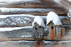 in the neighborhood (janne.skei) Tags: architecture animal art house houses bird birdhouse birdhouses roof romantic nostalgic timberwalls snow cold winter neighbors nature old cozy beautiful background color close peace frozen fz200 heart ice light wildlife minimalistic lumix lovely love lumixfz200 magic moment norway norge ngc outdoor panasonic surnadal white